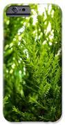 White Cedar. IPhone 6s Case by Slavica Koceva