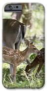 White-tail Twins Portrait IPhone 6s Case by Dana Moyer