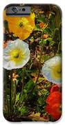Wild Poppies IPhone 6s Case by Helen Carson