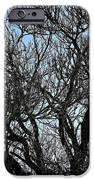 Winter Tree Hill End Nsw IPhone 6s Case by Ian  Ramsay