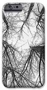 Winter's Forest IPhone 6s Case by Rod Sterling