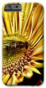 Bee IPhone 6s Case by Kelly Rader