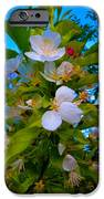 White Beauty IPhone 6s Case by Sergio Aguayo