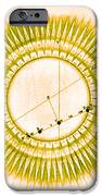Transit Of Venus, 1761 IPhone Case by Science Source