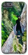 Anhinga On A Cyprus IPhone 6s Case