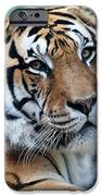 Bengal IPhone 6s Case by Elizabeth Hart