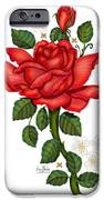 Christmas Rose 2011 IPhone 6s Case by Anne Norskog