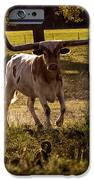 Don't Mess With Texas ..... Long Horns That Is  IPhone 6s Case