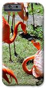 Flamingo Face-off IPhone 6s Case by Elizabeth Hart