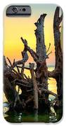 Longboat Key Tree IPhone 6s Case
