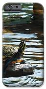 Out On A Limb IPhone 6s Case by Frank Feliciano