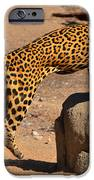 The Spotted Cat IPhone 6s Case by Farah Faizal