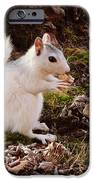 White Squirrel With Peanut IPhone 6s Case by Crystal Joy Photography