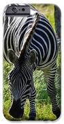 Zebra At Close Range IPhone 6s Case by Kelly Rader