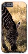 Zebra Take One IPhone 6s Case