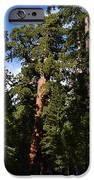 Yosemite Sequia IPhone 6s Case