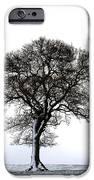 Lone Tree In Field IPhone Case by John Short