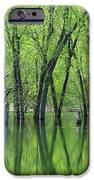 Spring Green Reflections  IPhone 6s Case
