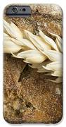 Close Up Bread And Wheat Cereal Crops IPhone 6s Case by Deyan Georgiev