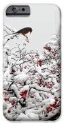 A Little Bird So Cheerfully Sings IPhone 6s Case by Guy Ricketts