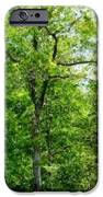 A Tree In The Woods At The Hacienda  IPhone Case by David Lane