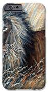 African Lion 2 IPhone Case by Nick Gustafson