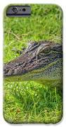 Alligator Up Close  IPhone 6s Case by Allen Sheffield