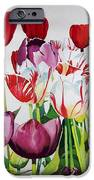 Attention IPhone Case by Elizabeth Carr