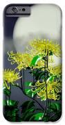 Autumn Chrysanthemums IPhone 6s Case