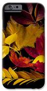 Autumn Leaves IPhone 6s Case by Barry C Donovan