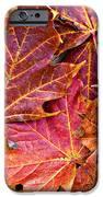 Autumnal Carpet IPhone Case by Meirion Matthias