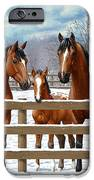 Bay Appaloosa Horses In Snow IPhone 6s Case by Crista Forest