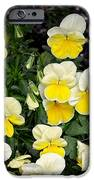 Beautiful Yellow Pansies IPhone 6s Case