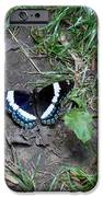 Beauty On The Dusty Path IPhone 6s Case by Carrie Viscome Skinner