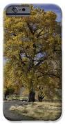 Belfry Fall Landscape 5 IPhone 6s Case