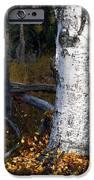 Birch Autumn 3 IPhone Case by Ron Day