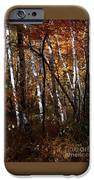 Birch Trees In The Fall IPhone 6s Case