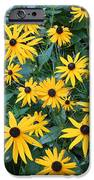 Black Eyes Of The Sun IPhone 6s Case by Carrie Viscome Skinner