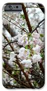 Blooming Apple Blossoms IPhone 6s Case by Eva Thomas