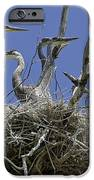 Blue Heron 36 IPhone 6s Case