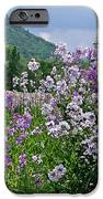 Boundary Of Beauty IPhone 6s Case