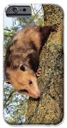 Brer Possum IPhone 6s Case by David Sutter