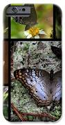 Butterfly Collage 1 IPhone 6s Case