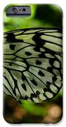 Butterfly IPhone 6s Case