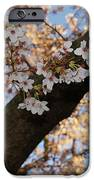 Cherry Blossoms IPhone 6s Case by Megan Cohen