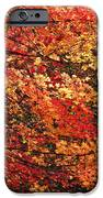 Colors Blowing In The Wind IPhone 6s Case by Lori Frisch