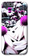 Cone Flower Delight IPhone 6s Case by Kevyn Bashore