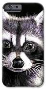 Coon IPhone 6s Case by Janet Moss