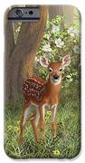 Cute Whitetail Fawn IPhone 6s Case by Crista Forest