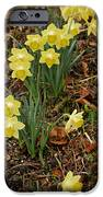 Daffodils With A Purple Flower IPhone 6s Case